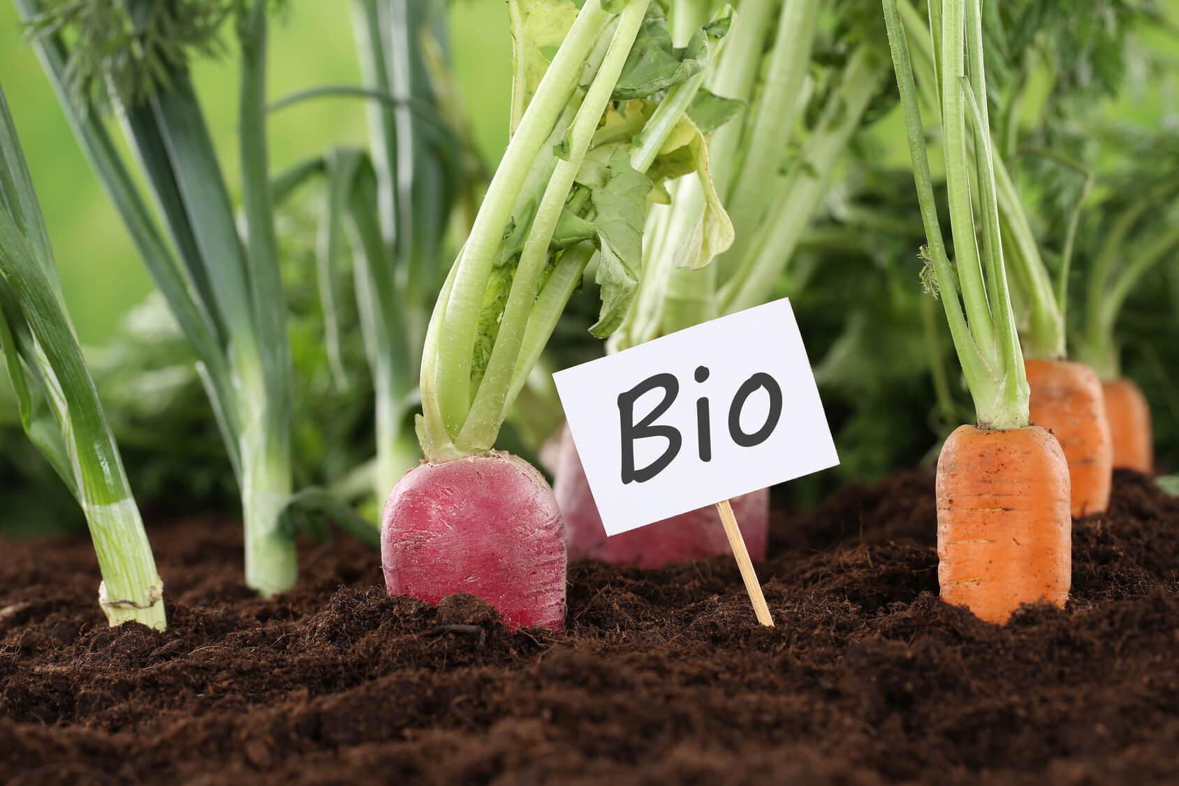 Bio Saatgut Kaufen : bio saatgut bio samen online kaufen bestellen in de ~ A.2002-acura-tl-radio.info Haus und Dekorationen
